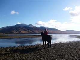 On the Isle of Mull - Fell pony Leonardo and a view of Ben More