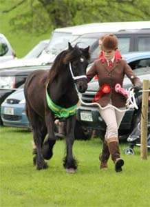 Fell Pony Youngstock Champion Murthwaite Sid