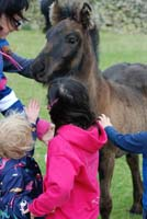 fell pony foal with children