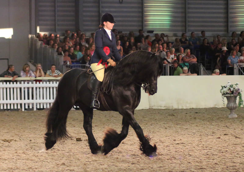 Fell stallion Bybeck Kasper winning at Equifest show