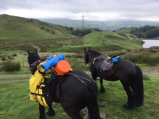 riding and pack ponies resting on the ride, near Rochdale