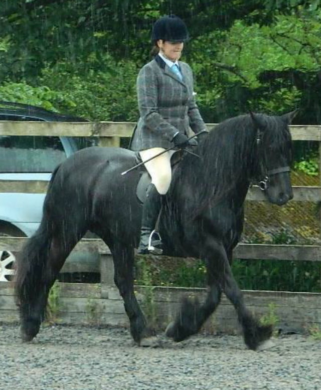 black fell pony being ridden in the rain