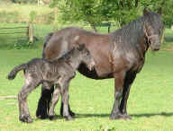 Drybarrows May and her foal Llancloudy Alpha