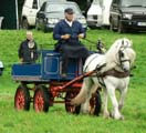 grey Fell pony in a tradesman's turnout