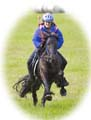 Endurance racing with a Fell pony